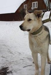 Активный,  доброжелательный,  ласковый пес ищет хозяина!