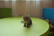 Ищу хозяина для милой полосатой кошечки