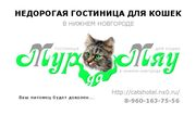 Гостиница для кошек в Нижнем Новгороде