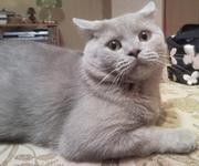 У кота женилка выросла