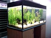 Изготовление,  оформление и обслуживание аквариумов