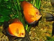 Продажа аквариумных рыбок