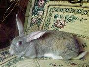 Продажа кроликов Нижний Новгород