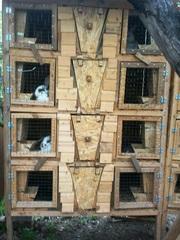 клетки для кроликов уличного содержания
