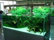 Красивые аквариумы. Недорого