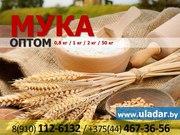 Мука пшеничная и ржаная оптом из Беларуси