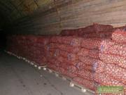 Картофель оптом от производителя ГОСТ 7176-85