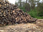 Куплю древисину для строительства лежневой дороги.