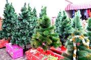 Новогодние живые елки,  сосны,  искусственные елки оптом.
