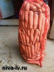 Предлагаем морковь от производителя,  оптовая и розничная реализация